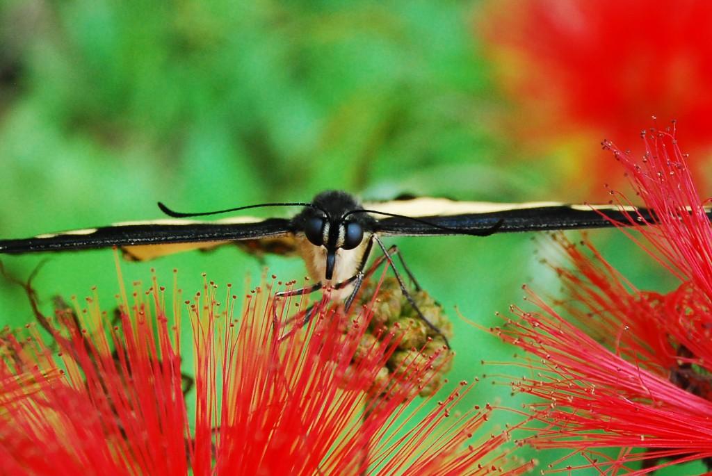 Relatório do painel de biodiversidade será apresentado em São Paulo