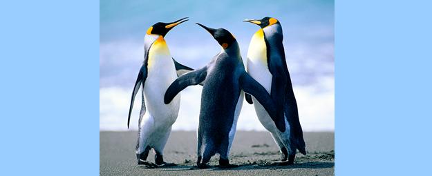 Reunião do Tratado da Antártica termina com meta de proteger a biodiversidade