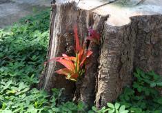 VI Simpósio de Restauração Ecológica – 23 a 27 de novembro de 2015