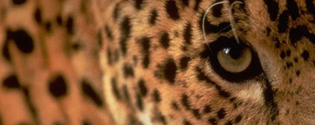 COMUNICADO SMA/IBAMA – Recadastramento de Empreendimentos de Fauna (IN IBAMA nº 14/2014)