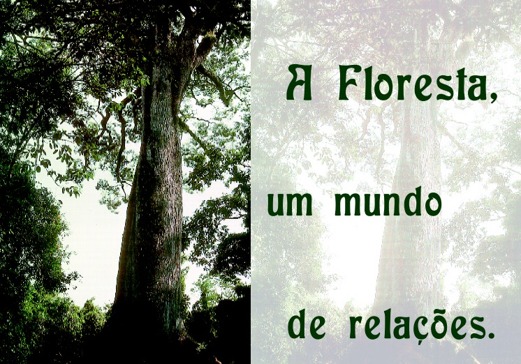 A floresta, um mundo de relações