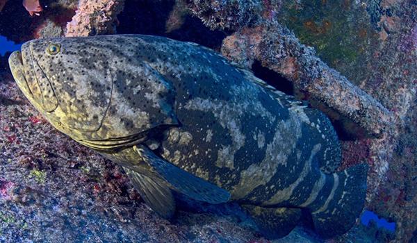 Fiscalização flagra pesca indevida no entorno do P. E. Ilha Anchieta