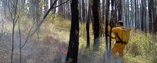 Operação Corta Fogo executa ações preventivas e de combate a incêndios florestais
