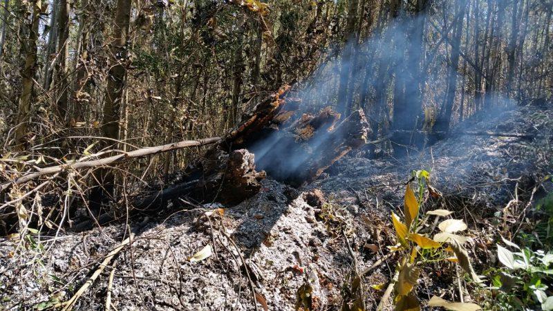 União de esforços para salvar as florestas