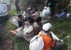Operação resulta na prisão de 16 palmiteiros no Parque Estadual Serra do Mar (PESM)