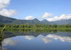 Fundação Florestal celebra Dia da Mata Atlântica