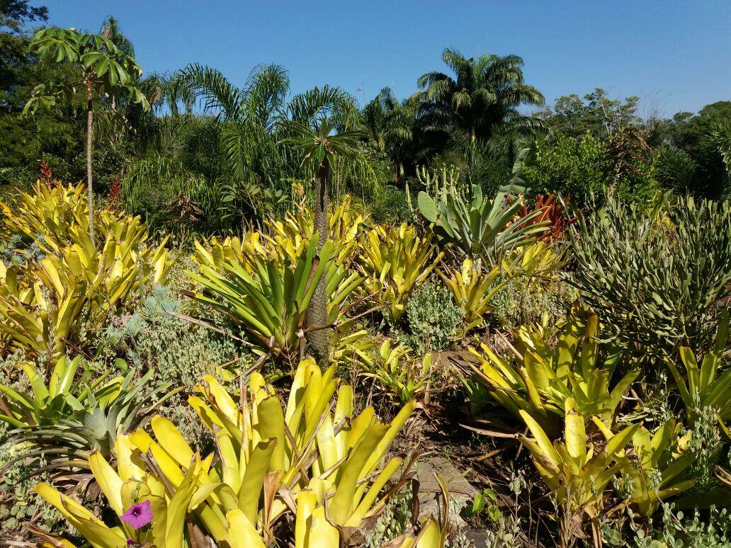 Minicurso sobre Telhados Verdes acontece no PESM – Caraguatatuba