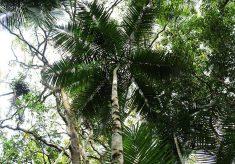 Sistemas agroflorestais e manejo do palmito-juçara são temas de palestra