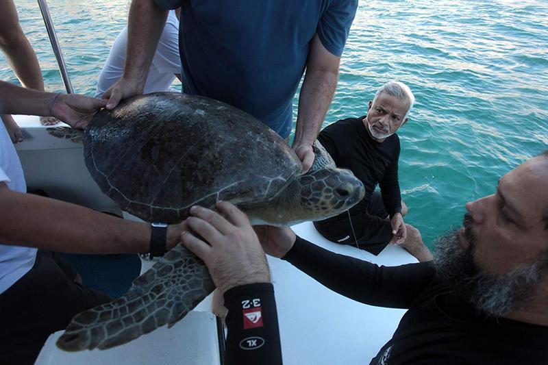 Duas tartarugas são soltas no PE Marinho Laje de Santos