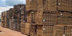 Exemplo de pátio de madeireira organizada