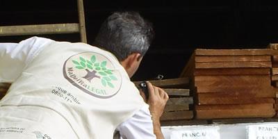 Agente do Instituto Florestal (IF) identificando a espécie da madeira nativa