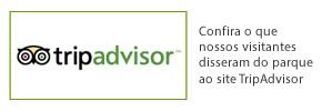 advisor-wp
