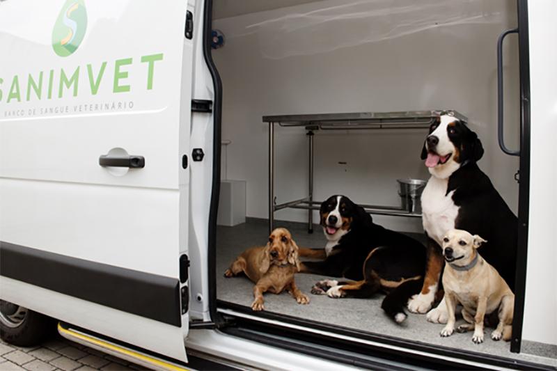 Alunos de veterinária da USP ensinam como cuidar dos pets
