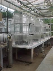 Câmaras de topo aberto onde foram realizados os experimentos