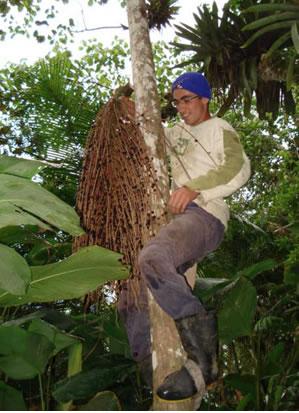 Projeto Palmeira Juçara mostra resultados no Vale do Paraíba