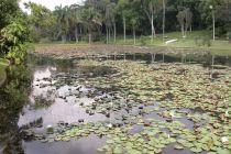 Jardim Botânico: Um cantinho de paz em uma cidade grande