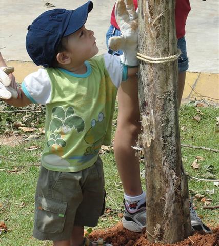 Plantio de 8.400 mudas é finalizado no Parque Villa-Lobos