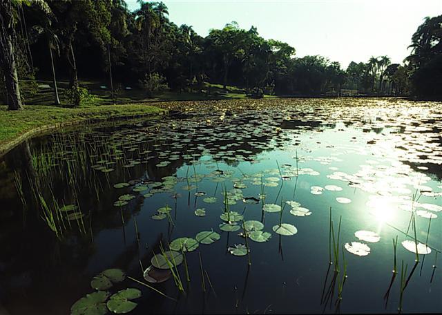 Jardim Botânico de São Paulo recebe reconhecimento inédito no Brasil