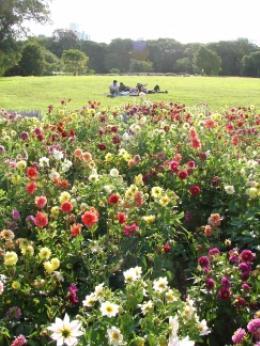 Botânico promove oficinas educativas