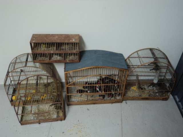 Polícia Militar Ambiental apreende mais de 170 aves