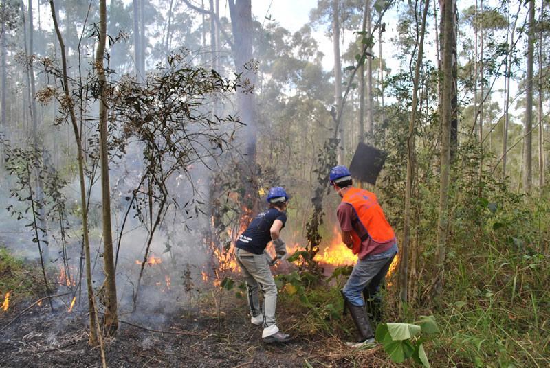 SMA promove seminário sobre prevenção e combate a incêndios florestais