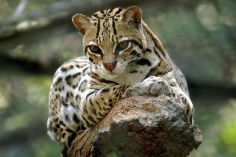 Zoo lança mestrado em conservação da fauna