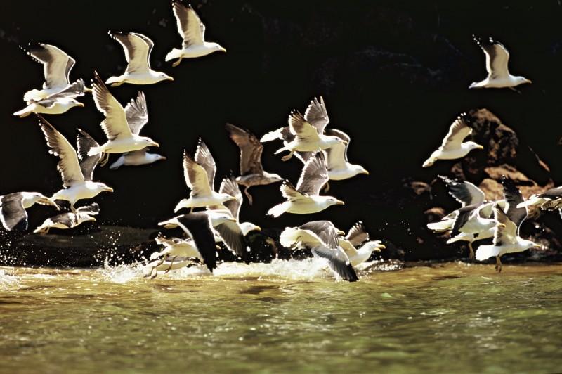 Parceria com o WWF-Brasil apoiará gestão de unidades de conservação públicas e privadas
