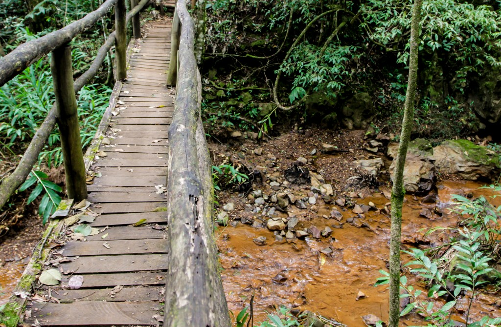 Infrator ambiental pode ter pena alternativa em São Paulo