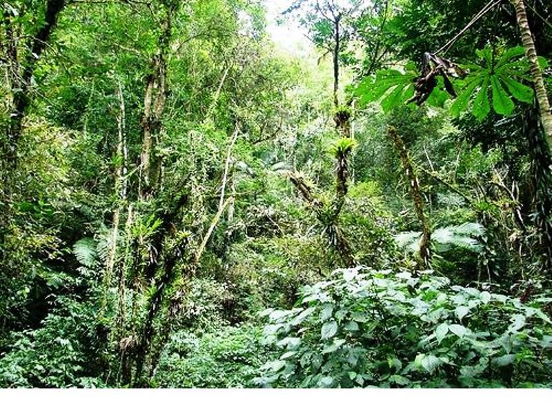 Encontro para discutir os Instrumentos para Viabilizar Economicamente Florestas Nativas