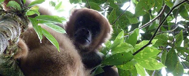 Seminário reúne especialistas em primatas