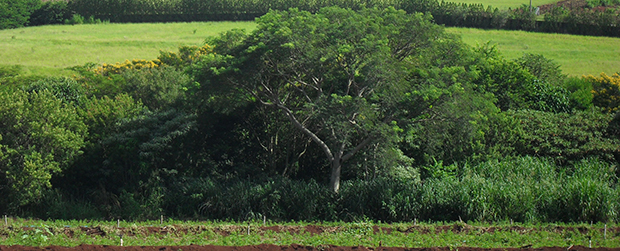 SMA firma parceria em favor de plano estratégico de restauração florestal