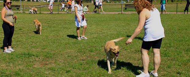 Fim de semana para seu cachorro no Parque Villa-Lobos