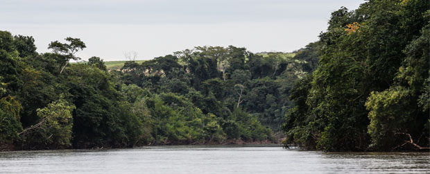 VI Simpósio de Restauração Ecológica ocorre de 11 a 13 de novembro