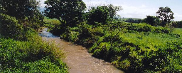 Restauração ecológica é prioridade no estado de São Paulo