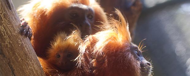 Espécies ameaçadas de extinção dão a luz no Zoológico