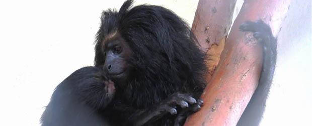 Centro de Conservação da Fauna Silvestre ganha novo habitante