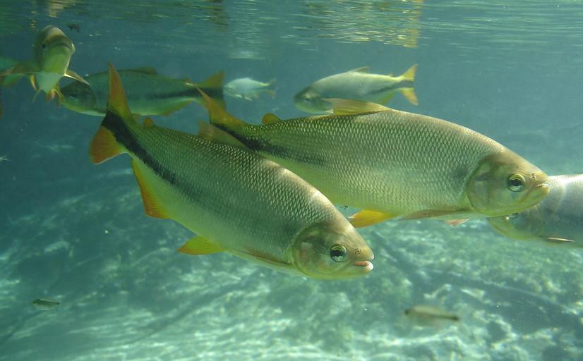 Importância dos peixes para a biodiversidade