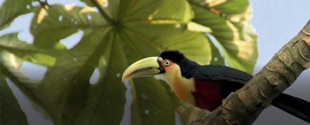 Férias no Zoológico com lições de educação ambiental