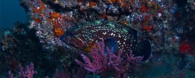 Portaria MMA sobre espécies aquáticas ameaçadas volta a vigorar