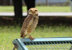 Horto Florestal recebe evento para observadores de pássaros