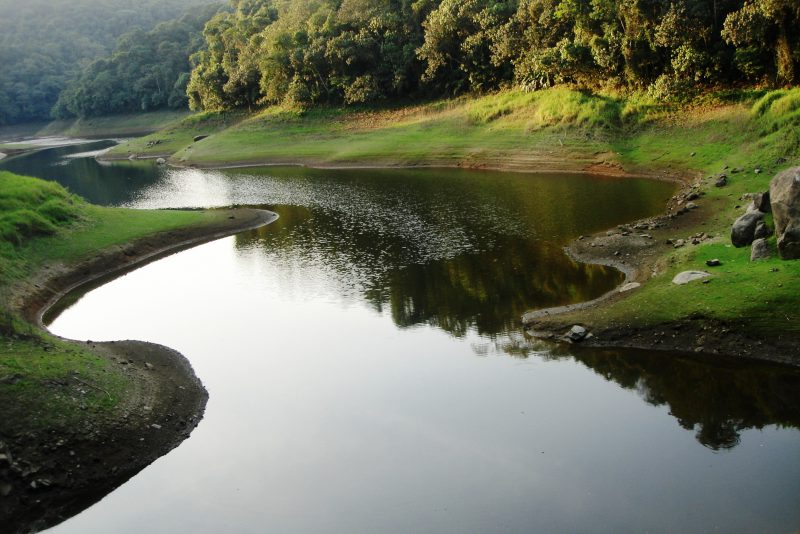 Cantareira recupera área de floresta na capital