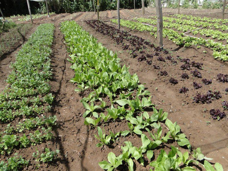 Protocolo de transição agroecológica tem novas adesões
