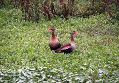 Parque Vassununga recebe evento de observação de aves no sábado