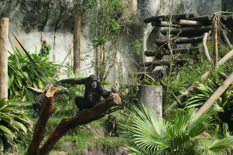 Zoo comemora 59 anos de dedicação à conservação da Biodiversidade