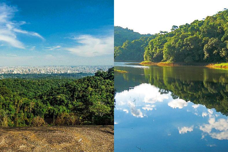 Parque Estadual da Cantareira é refugio verde dentro de SP