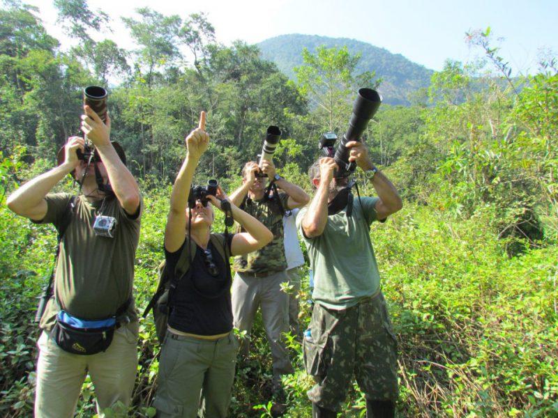V Curso de Observação de Aves acontece em Caraguatatuba no PESM