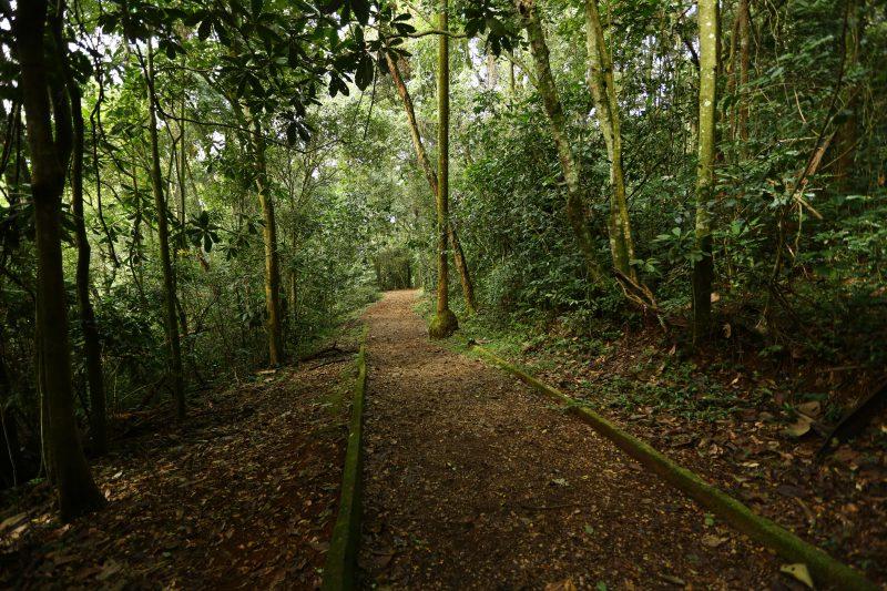Parque Estadual Jaraguá completa 56 anos e presenteia a natureza