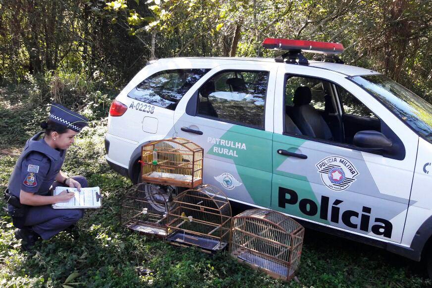 Bauru: aves silvestres são apreendidas em 3 bairros