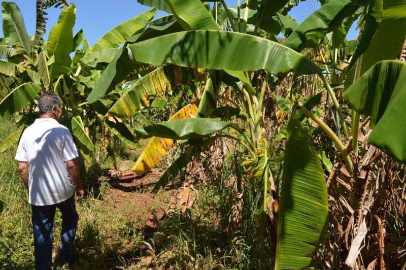 Sistema agroflorestal como alternativa para produção sustentável