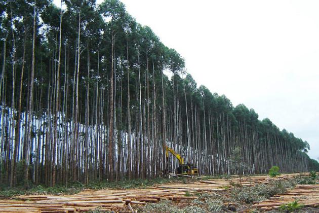 Estudos sobre manejo de floresta ganham laboratório em Itatinga
